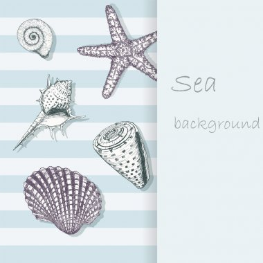 Sea shell background 4