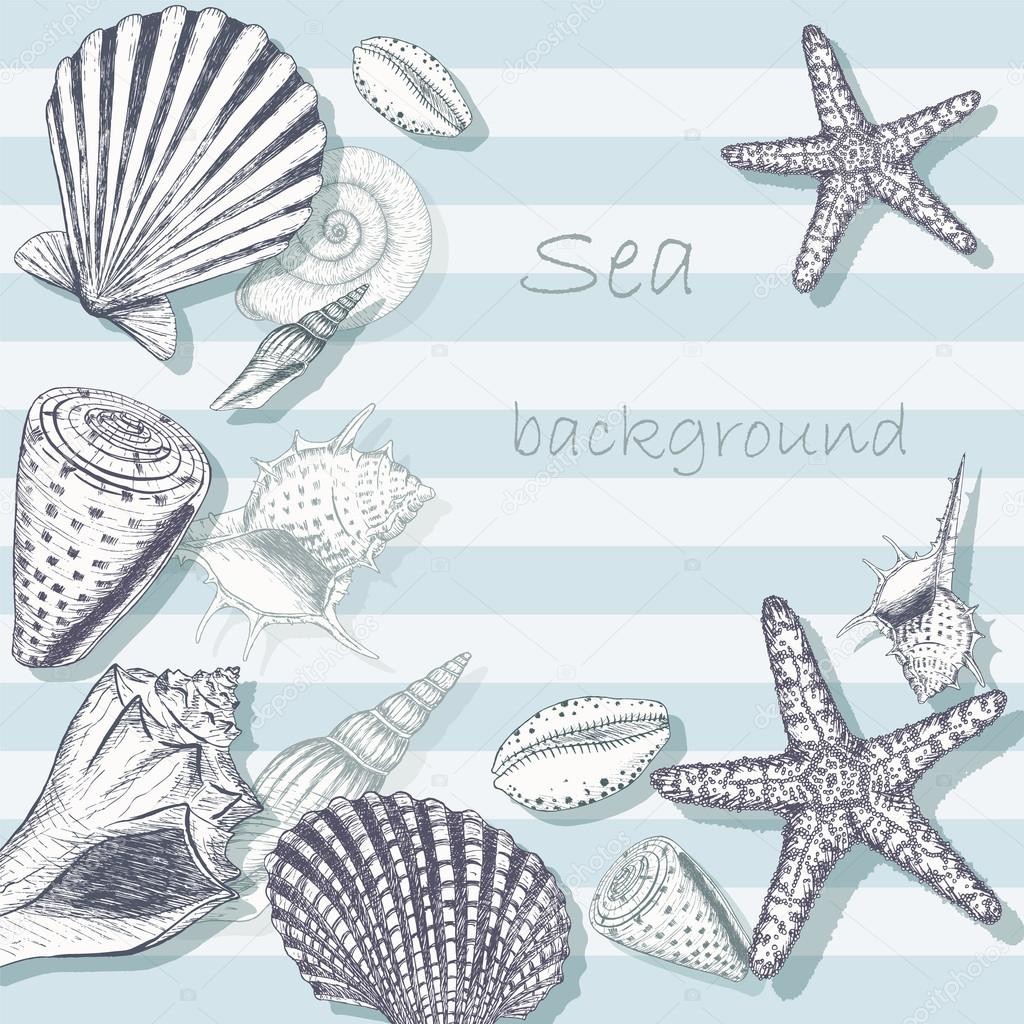 Sea shell background 5