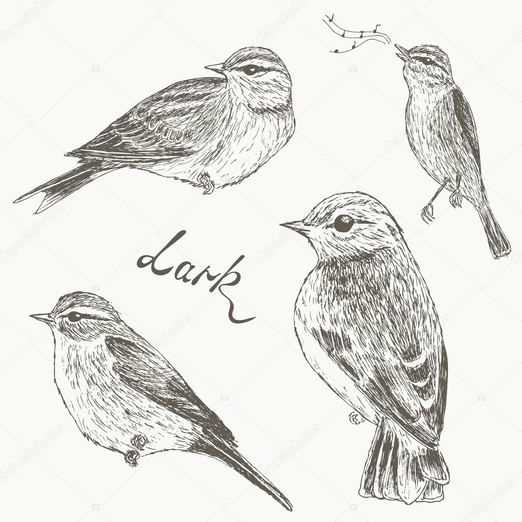 Birds set. Larks