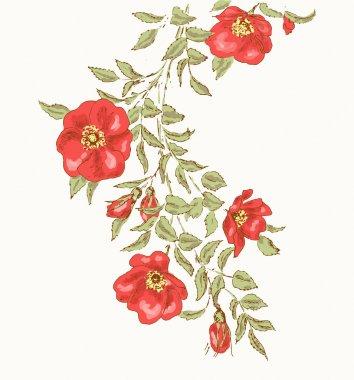 Vintage flower background. Beautiful illustration with dog rose stock vector