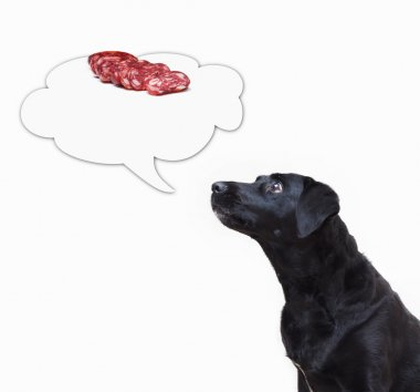 Dog looking to the thought bubble with salami