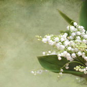 Fotografie Flower lily of the valley