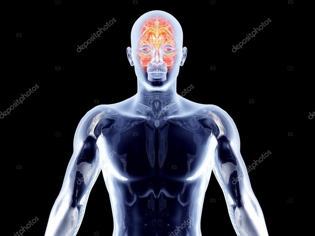 órganos internos - cerebro — Fotos de Stock © Spectral #14660191