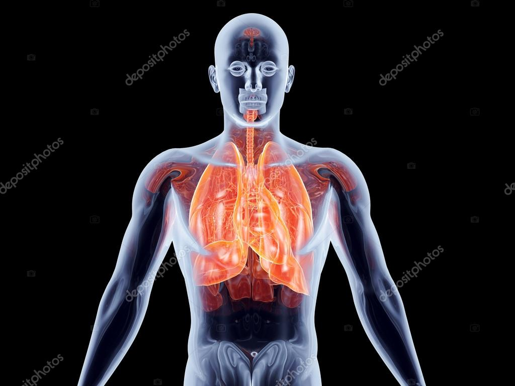 innere Organe - Lunge — Stockfoto © Spectral #18864293