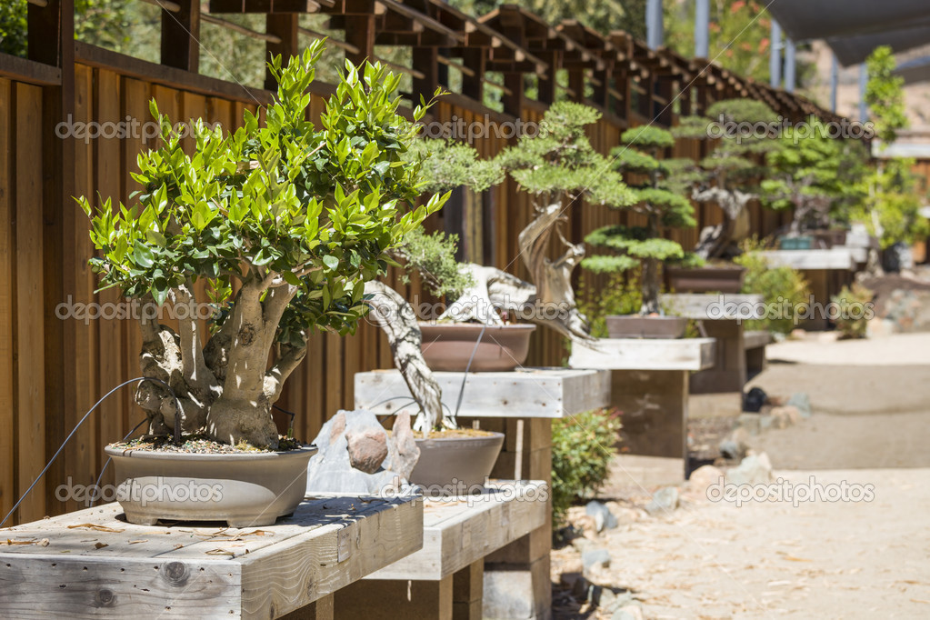 Variety of Bonsai Trees on Display
