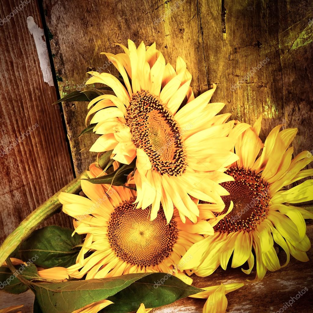 Sunflowers With A Grunge Rustic Wooden Background Stock Photo