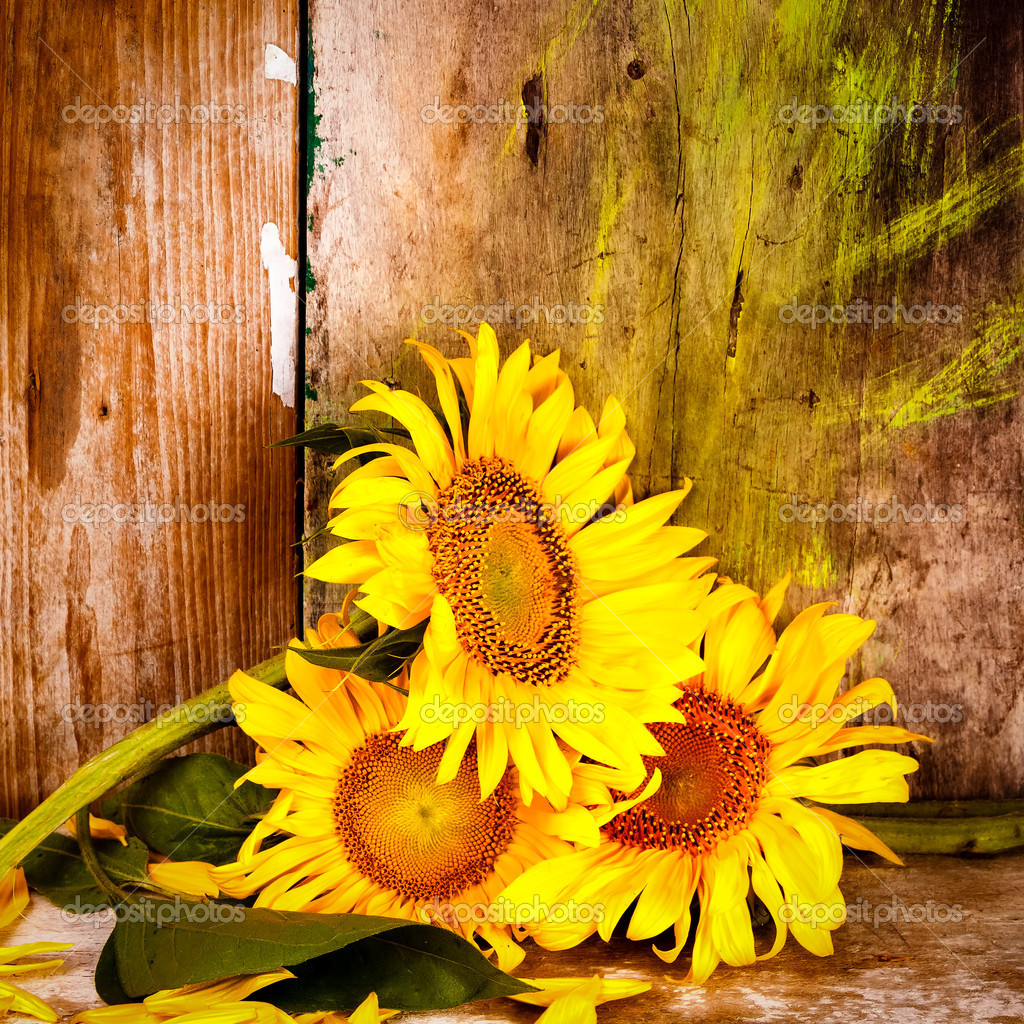 Sunflowers Next To A Rustic Wooden Background Stock Photo