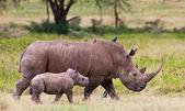 Photo White rhinoceros or square-lipped rhinoceros (Ceratotherium simum) with her baby in Lake Nakuru National Park, Kenya.