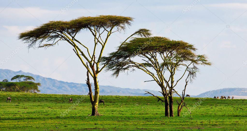 Beautiful African landscape at Lake Naivasha, Kenya
