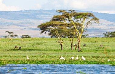Lake in the savanna
