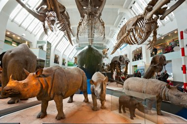 LONDON, UNITED KINGDOM - MARCH 03: Interior view of Natural Hist