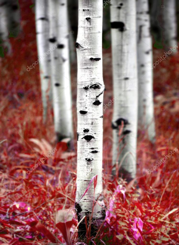 Осенью листья березы фото