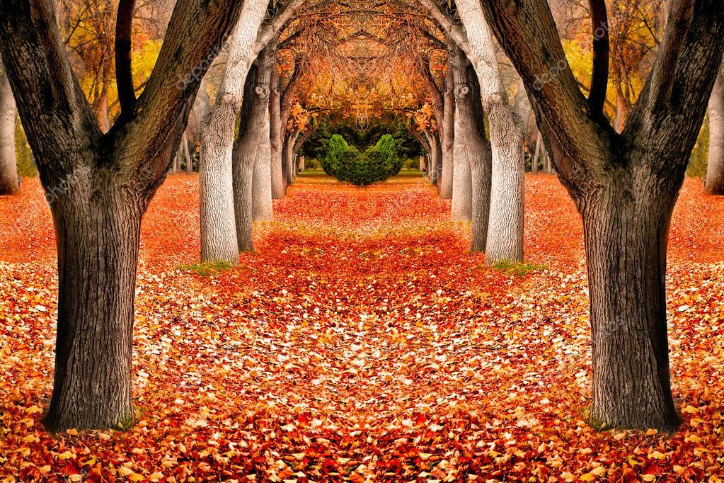 Paisaje de rboles de oto o fotos de stock eric1513 - Descargar autumn leaves ...