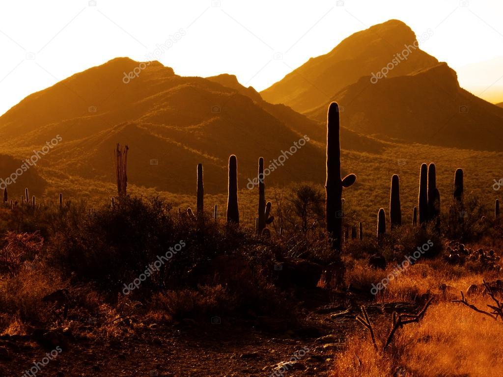 Desert Southwest Saguaro Cacti