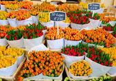 tulipány v Amsterdamu