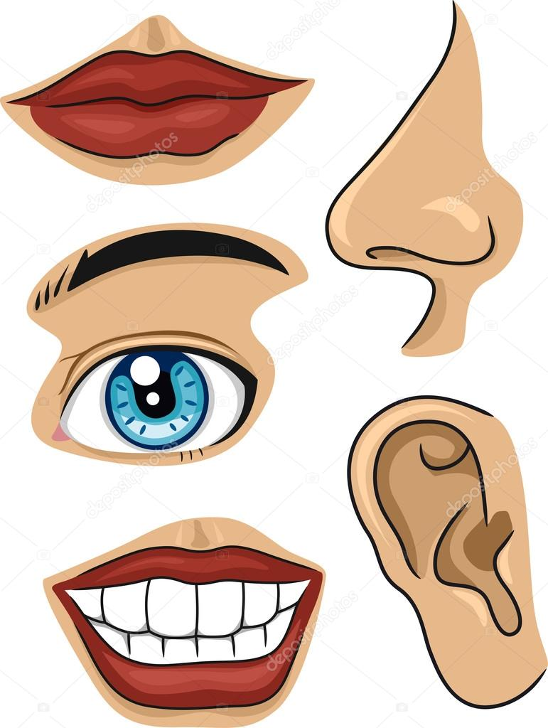parts of the face stock photo lenmdp 17178679 rh depositphotos com  face parts clipart black and white
