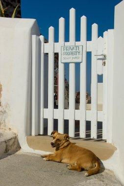 Dog guarding the house in Oia Santorini