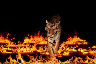 Tiger in Blazing flames