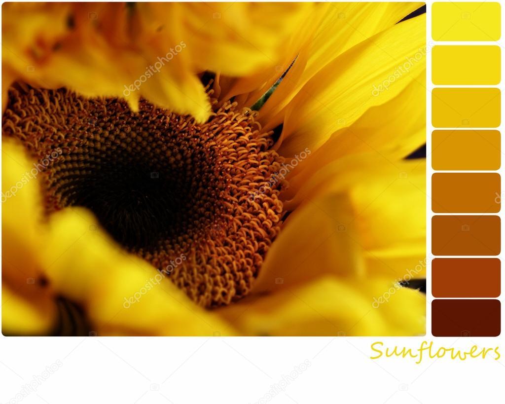 Sunflower Palette