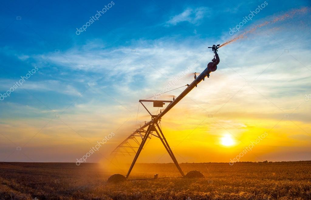 Irrigation pivot on the wheat field at summer sunrise
