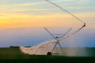 Irrigation system on the wheat field at sunset