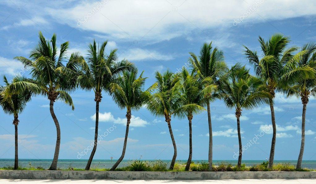 Ряд пальм