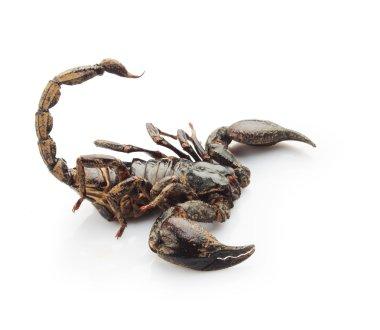 Close-up scorpion