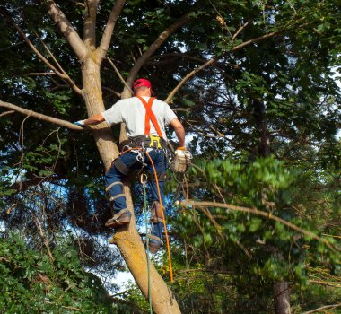 Arborist Trimming Down a Tree