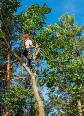 Arborist Trimming Down a Tree