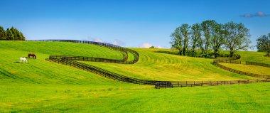 Horse farm fences