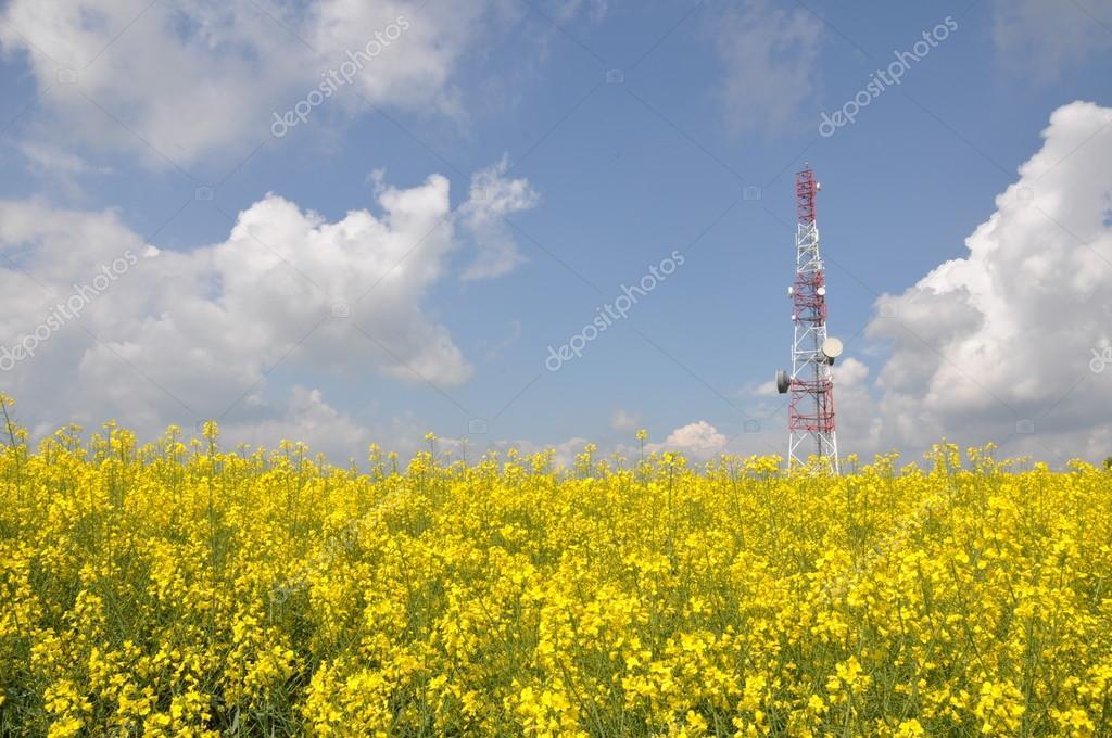 Telecommunication tower on a rape field
