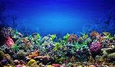 Fotografie korálový útes温度計、錠剤