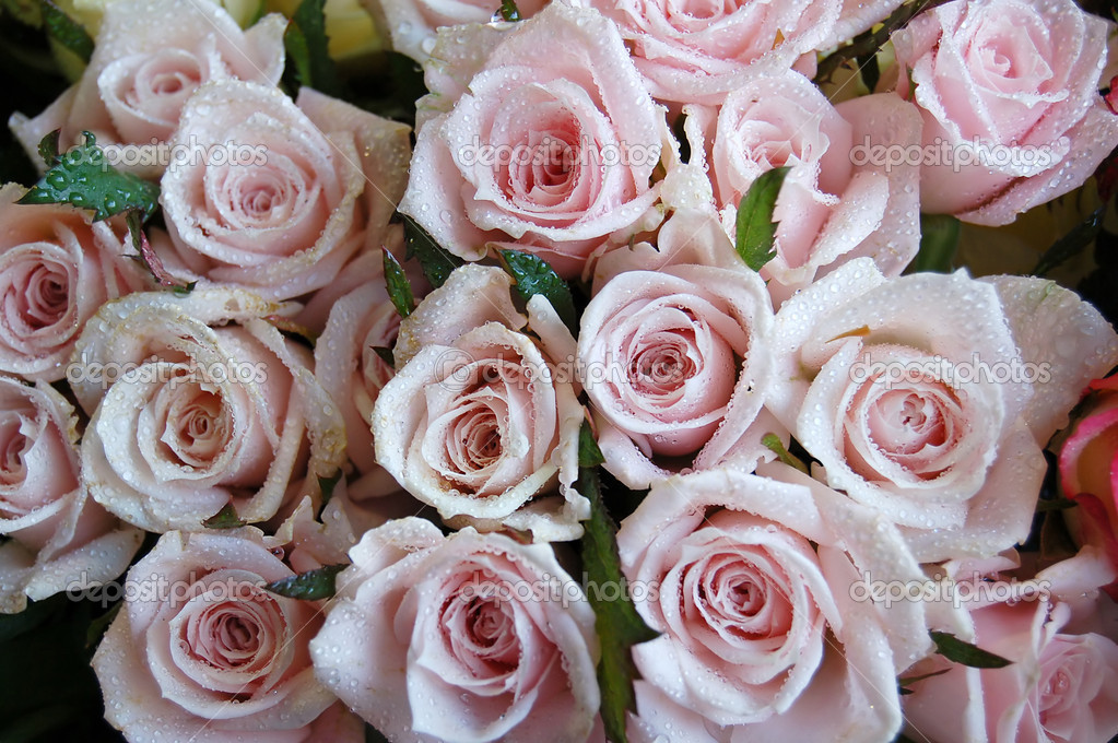 Close up of a bouquet of pink roses
