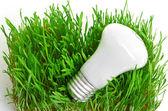 Fényképek A fű zöld energia szimbolizáló izzó