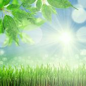 zelené a modré abstraktní rozostřeného pozadí se sluníčkem