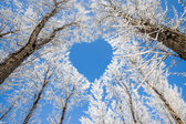 Photo Winter landscape,branches form a heart-shaped pattern
