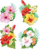 Hibiszkusz virág elrendezése