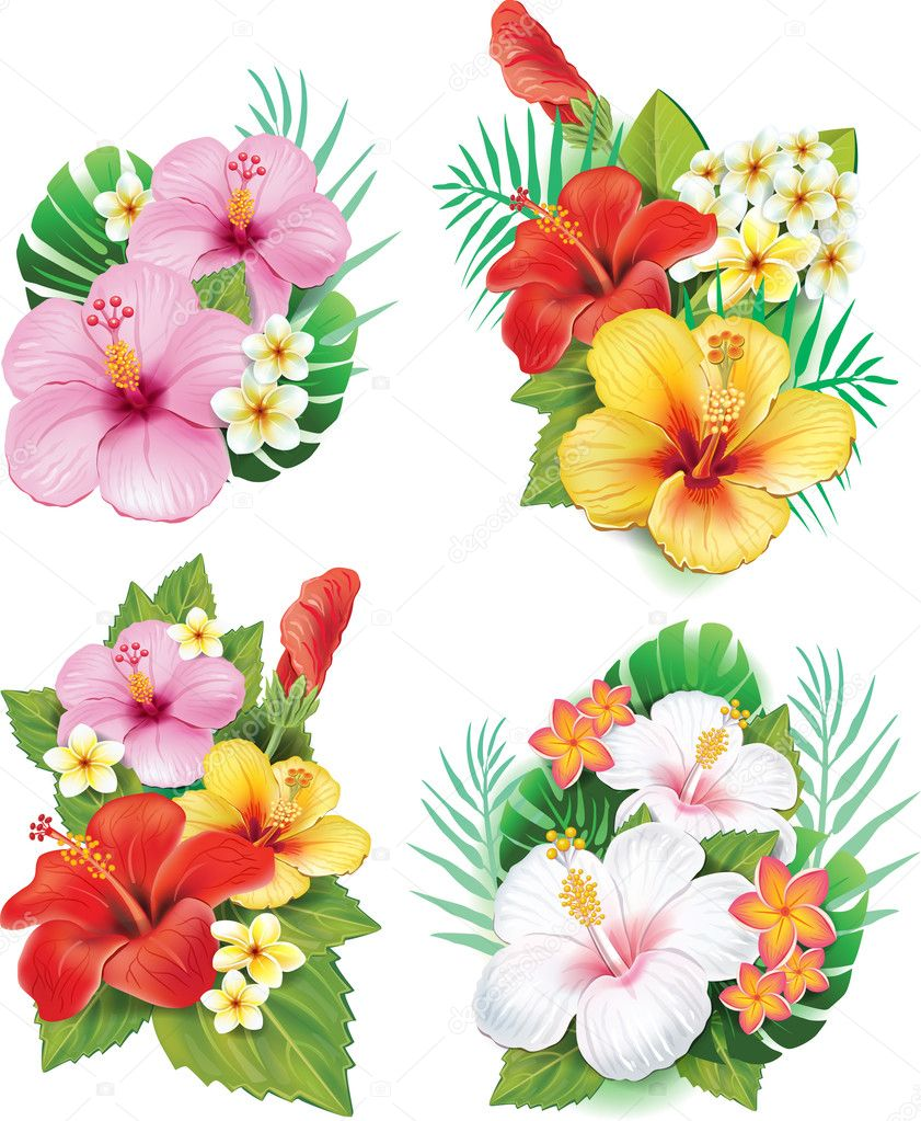 Hibiscus Stock Vectors Royalty Free Hibiscus Illustrations