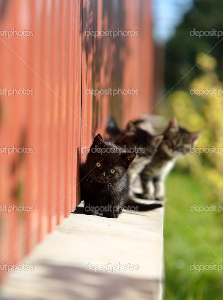 beautiful Funny kittens