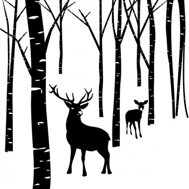 Couples of deer and forest