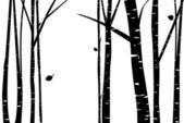 Fotografie Bříza a lesní ilustrace