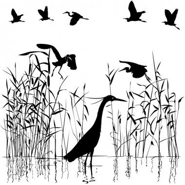 Group of Egrets in swampland illustration