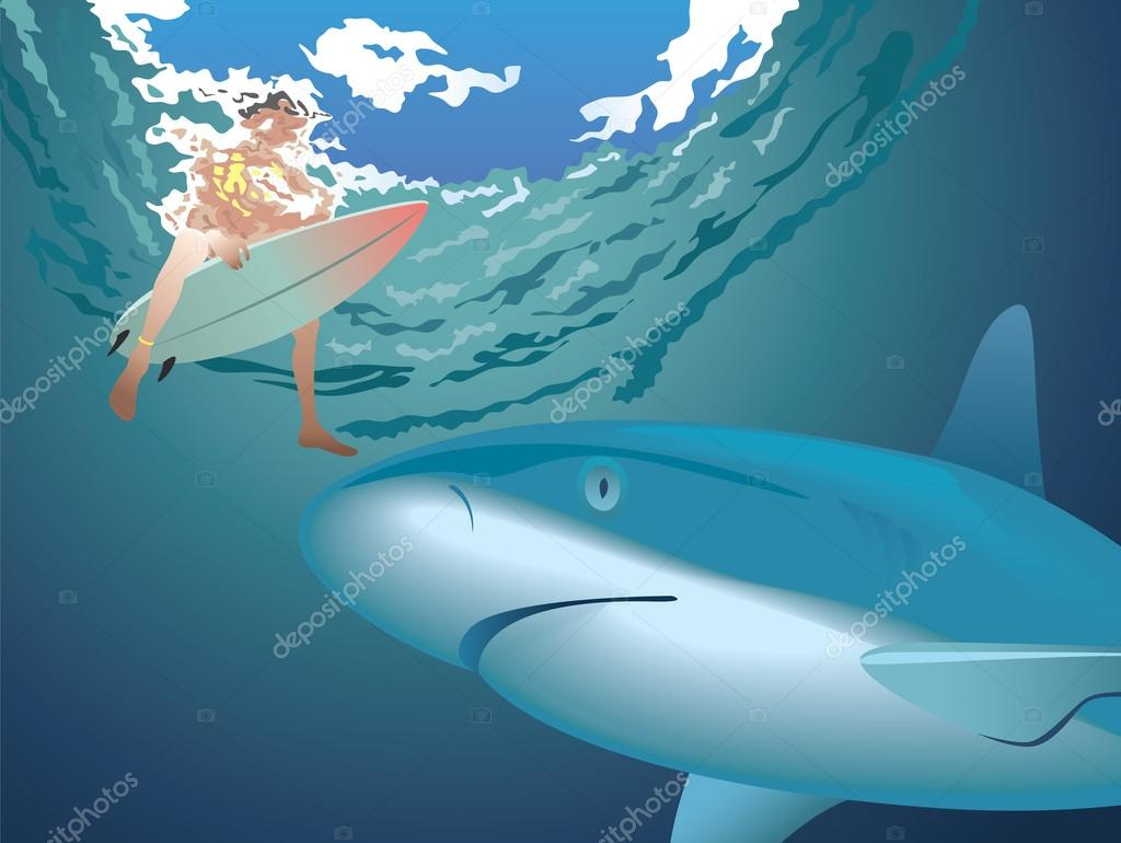 Shark and surfer