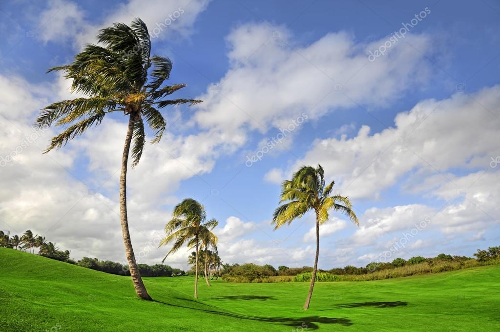 Palm trees on a hilly golf course in Kauai, Hawai