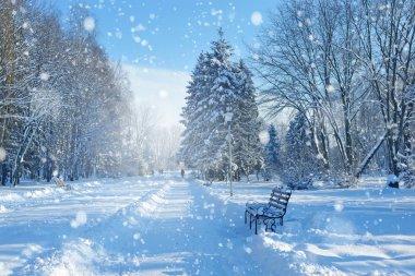 Karla kaplı ağaçlarla kaplı güzel kış manzarası