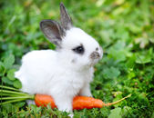 Photo Funny baby white rabbit with a carrot in grass