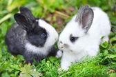 Fotografia conigli bambino divertente in erba