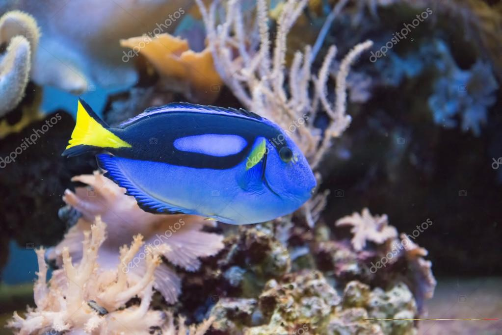 tropical fish tank u2014 stock photo