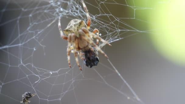 zblízka pavouka jíst