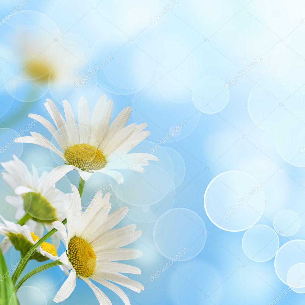 Daisywheels on blue background